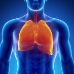Зона верхних и нижних дыхательных путей