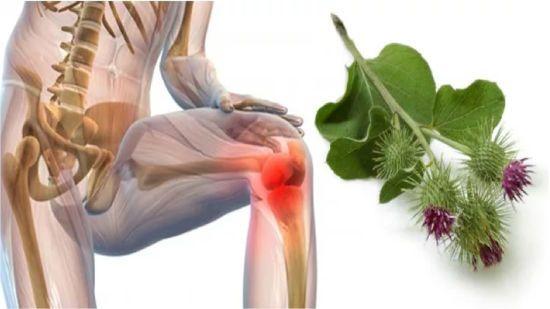 Больной сустав и лопух