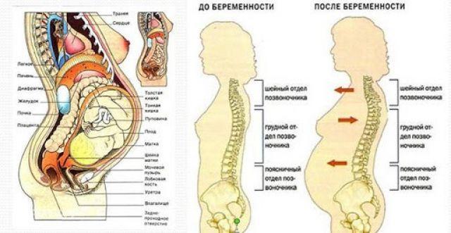 Изменение изгибов позвоночника во время беременности