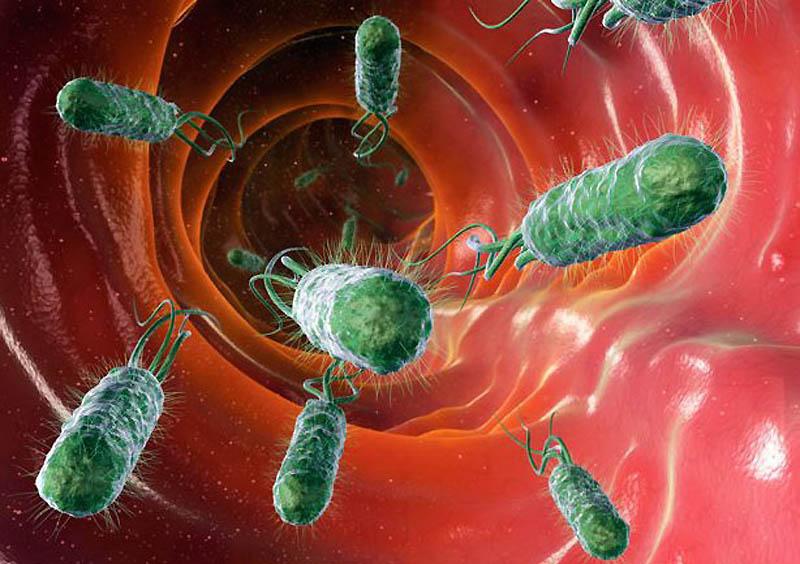 Бактерий заселяют мочевыводящие пути