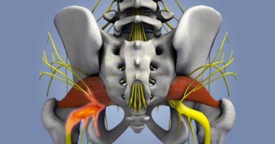 Иннервация тазобедренного сустава