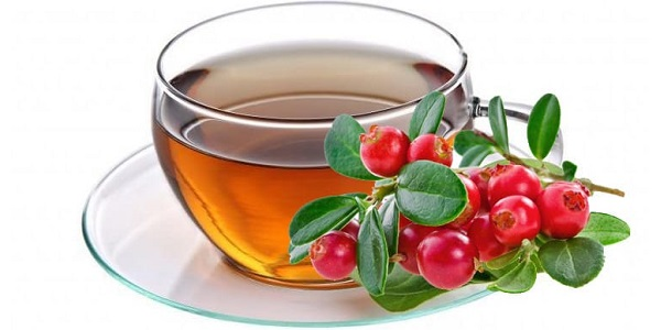 Брусничный лист предлагают готовить в виде чая
